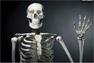 کشف سلول استخوانی