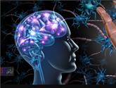 مکمل غذایی اثرات ژن خطر آلزایمر  را معکوس میکند