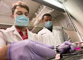 سلول درمانی سکته مغزی به کمک سلول پوست،۹۰٪ عملکرد را بازیابی میکند