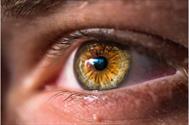 روش اتصال مجدد شبکیه با حداقل تهاجم منجر به یکپارچگی بهتر گیرنده نوری میشود
